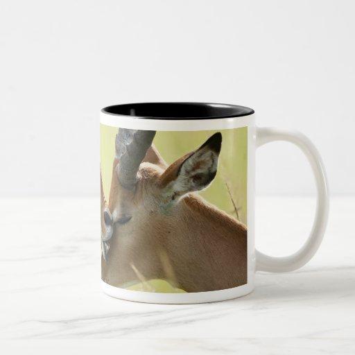 Impala, Aepyceros melampus, in the Masai Mara Coffee Mug