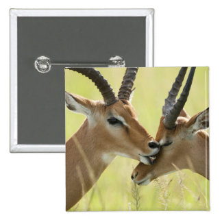 Impala, Aepyceros melampus, in the Masai Mara Pinback Button