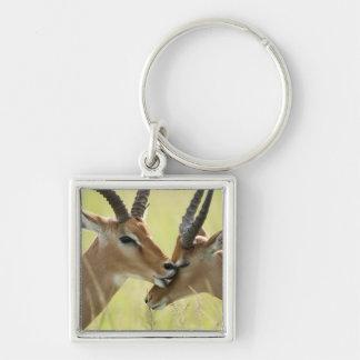 Impala, Aepyceros melampus, in the Masai Mara Silver-Colored Square Keychain