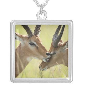 Impala, Aepyceros melampus, in the Masai Mara Square Pendant Necklace