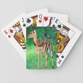 Impala (Aepyceros Melampus) Poker Cards