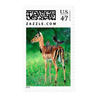 Impala (Aepyceros Melampus) Postage