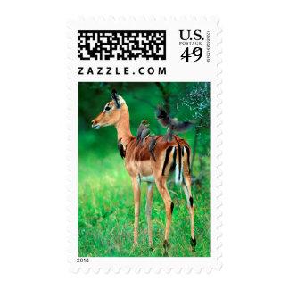 Impala (Aepyceros Melampus) Stamp