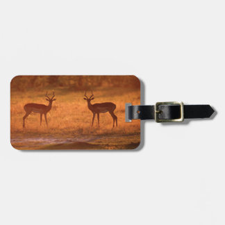 Impala (Aepyceros Melampus) Rams At Sunset Luggage Tag