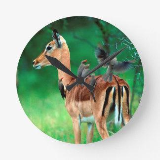 Impala (Aepyceros Melampus) Round Clock