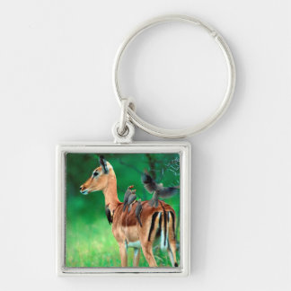 Impala (Aepyceros Melampus) Silver-Colored Square Keychain