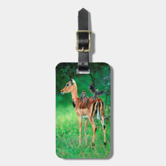 Impala (Aepyceros Melampus) Tag For Luggage
