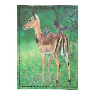 Impala (Aepyceros Melampus) Tyvek® Card Case Wallet