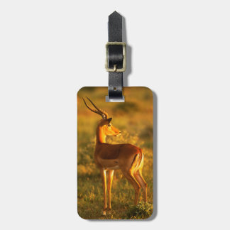 Impala in Golden Light Luggage Tag
