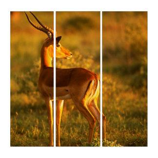 Impala in Golden Light Triptych