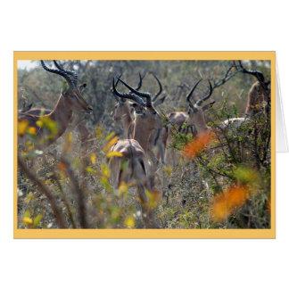 Impala in the bush card
