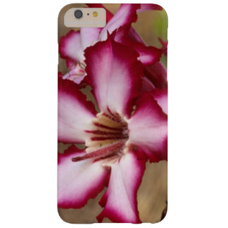 Impala Lily (Adenium Multiflorum), Kruger Barely There iPhone 6 Plus Case