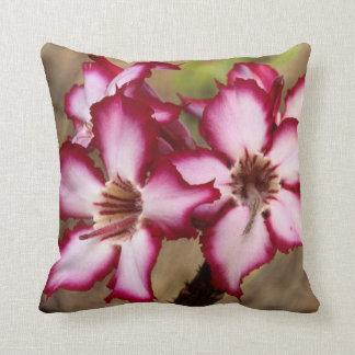 Impala Lily (Adenium Multiflorum), Kruger Pillow