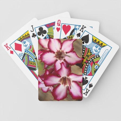 Impala Lily (Adenium Multiflorum), Kruger Bicycle Card Deck