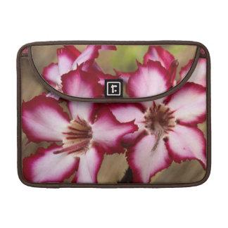 Impala Lily (Adenium Multiflorum), Kruger Sleeve For MacBooks
