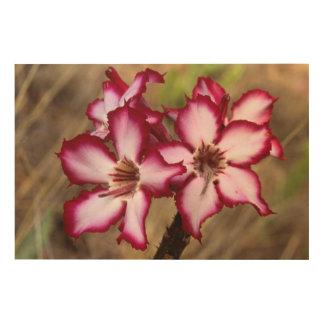 Impala Lily (Adenium Multiflorum), Kruger Wood Canvas