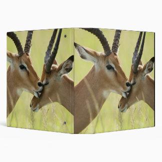 """Impala, melampus del Aepyceros, en el Masai Mara Carpeta 1 1/2"""""""