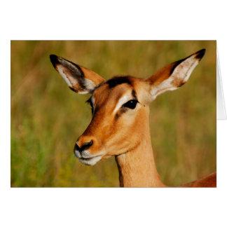 Impala safari animals greeting cards
