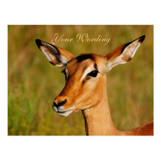 Impala safari animals greeting postcard