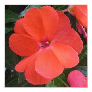 Impatien Orange New Guinea Personalized Announcement
