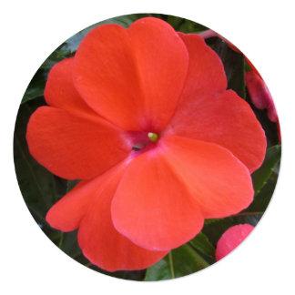 Impatien Orange New Guinea Custom Invites