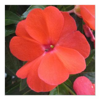 Impatien Orange New Guinea Custom Invite
