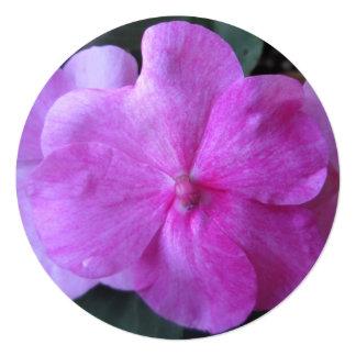 Impatien Purple Garden Flower Announcements