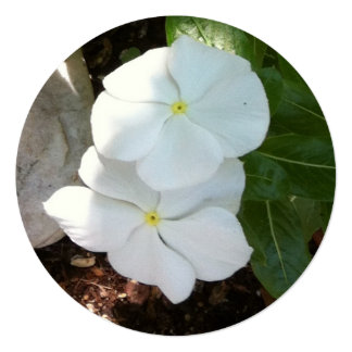 Impatien White Plant Custom Invitation