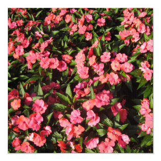 Impatiens Cluster Flowers Red Invites