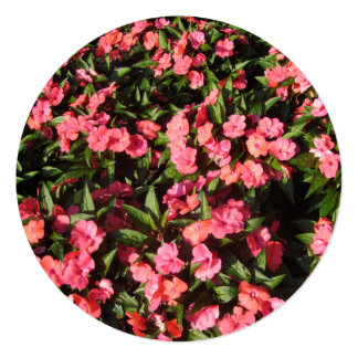 Impatiens Cluster Flowers Red Custom Announcement