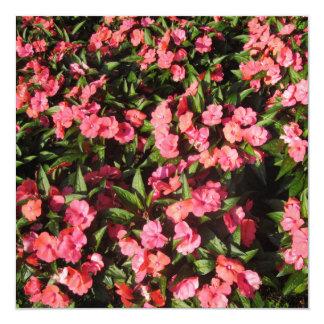 Impatiens Cluster Flowers Red Invite