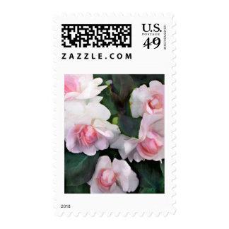 Impatiens doble rosado sellos