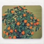 Impatiens, flores del rosa del tono naranja tapete de ratones