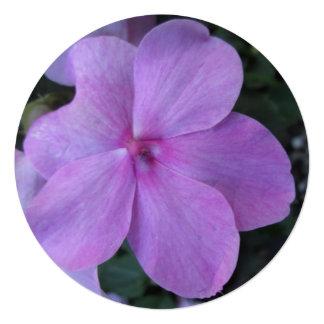 Impatiens Pink Purple Flower Invites
