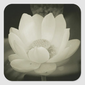 Imperfect Water Lily Square Stickers