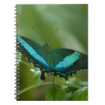 Imperial Butterfly Spiral Notebooks
