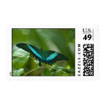 Imperial Butterfly Stamp