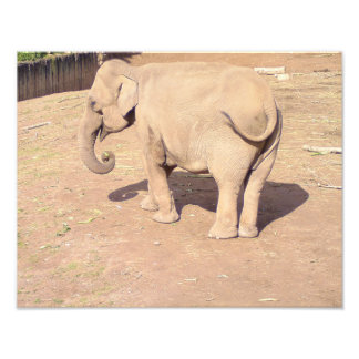 Impresión 14x11 del elefante del bebé fotografía