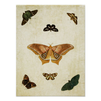 Impresión 176 de la mariposa del vintage
