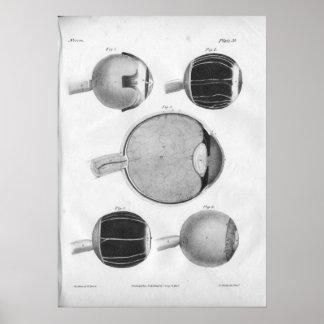 Impresión 1854 de la anatomía del ojo del vintage póster