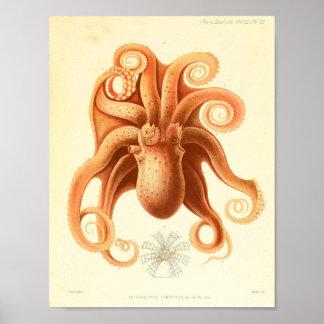 Impresión 1881 del arte del pulpo del color del