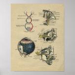 Impresión 1902 del vintage de la anatomía del ojo impresiones
