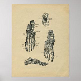 Impresión 1902 del vintage de la anatomía del pie