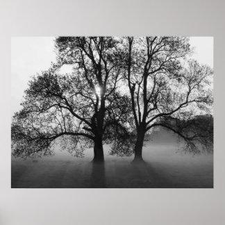 IMPRESIÓN - 2 árboles grandes negro y blanco Poster