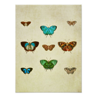 Impresión 333 de la mariposa del vintage póster