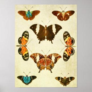 Impresión 364 de la mariposa del vintage posters