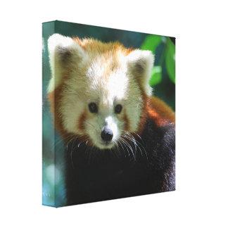 Impresión adorable de la lona de la panda roja lona envuelta para galerias