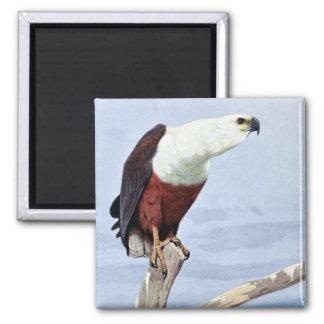 Impresión africana antigua de Eagle de pescados Iman De Nevera