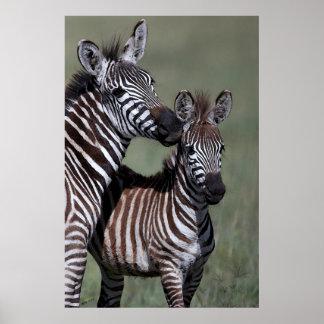 Impresión africana del poster de la fauna de la ce