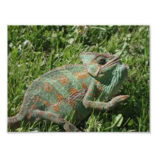 Impresión agresiva de la foto del camaleón